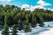 Shouf Cedars Snowshoeing | HighKings