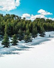 Shouf Cedars Snowshoeing | HighKings