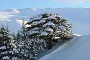 B2h Snowshoeing to Cedars of God