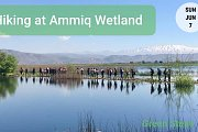 Hiking at Ammiq Wetland with GREEN STEPS