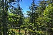 Hiking Hadath el Jebbe forest