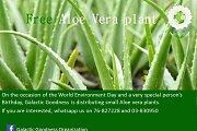 Free Aloe Vera Plants Giveaway