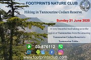 Footprints Hiking in Tannourine Cedars Reserve with Footprints Club