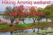 Ammiq Wetland Hike with Golden Feet