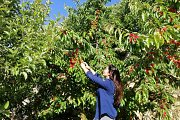 Cherry Picking/ Hiking/ Caving in Akoura