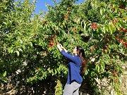 Cherry Picking/ Hiking/ Caving in Akoura