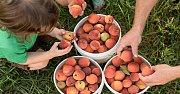 Peach Picking/ Hiking/ Caving in Akoura