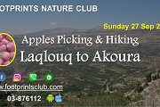 Footprints Apples Picking & Hiking from Laqlouq to Akoura