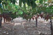 City Sightseeing Lebanon - Rachaya Citadel & Kfarmishki grapes/apples picking day
