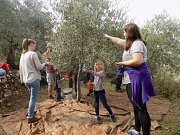 Olive Harvest & Oil Tasting with Dale Corazon at Douma and Chabtine