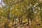 Kfardebian Oak Forest and Faqra Ruins Hike | HighKings
