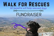 Walk For Rescues - Bchaaleh