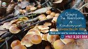 Chasing The Mushrooms
