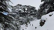 Cedars of God Snowshoeing with Vamos Todos