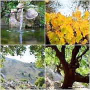 Darb Hajal-Mresti Forest Hike with Wild Adventures