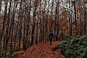 Hiking Kfardebian Ozer Forest with Lebanon by Nature