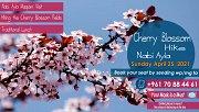 Cherry Blossom Hike