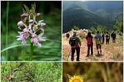 Aoudine Valley-Orchid Hike with Wild Adventures (New Trail)