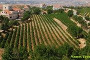 Hiking & Wine Tasting Tour with Vamos Todos