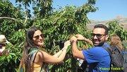 Cherry Picking in Jwar El Hawz with Vamos Todos