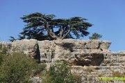 Tannourine Cedar Reserve Hike with Vamos Todos