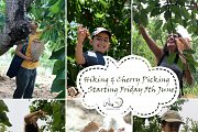 Hiking and Cherry Picking Event