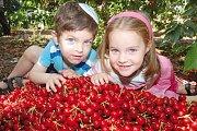Ecotourism Family Day & Cherry Picking
