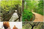 Ozur Forest Hike & Wadi Salib Hike with Wild Adventures