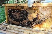 Khenchara Hike & Beekeeping Workshop with Vamos Todos