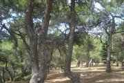 HIKING FROM IMAR FOREST TO KARM AL MOHOR with WALKLEB