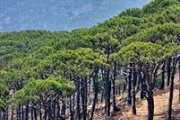 Hiking in Mtein - Bzebdine pine forest
