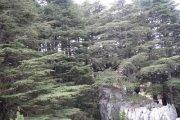 Ehmej Arz Jej Hiking with Vamos Todos