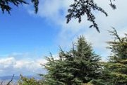 Hiking Barouk Cedars Forest with Byblos & Beyond