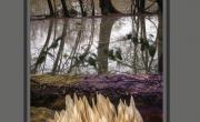 """Exposition de Photographies de France et du Liban - """"La Nature autrement"""" par Waël Abou Merhi"""