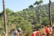 """""""Pine carpet..."""" Biking Bhamdoun - Aaraya"""