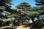 Hiking to Jaj Cedars (Jbeil)