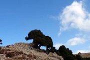 Randonnée à Karm el Mohr, caza de Dennieh avec le Club des Vieux Sentiers