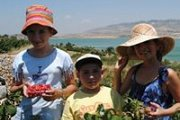 Raspberry Picking in front of Qaraou'n Lake with a lunch facing the lake !