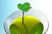InterNations Beirut: Shades of Green Flora!
