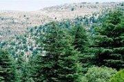 Hiking in Horsh Ehden