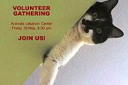 Animals Lebanon - Volunteers Meeting