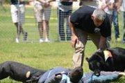 Dog training Seminar