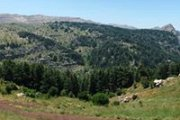 Hiking in Arz Tannourine  with Dale Corazon