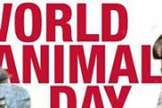 World Animal Day 2014