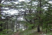 Hiking in Barouk Cedars Forest