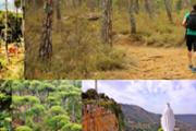 Hiking Bkassine Pine Forest-Jezzine with SOAC