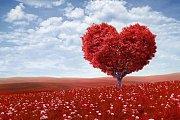 الحب الواعي في إطار التطبيق العملي