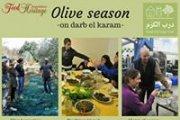 Olive season on darb el karam