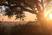 """""""SECRET D'AUTOMNE"""" French dinner by Bruno"""