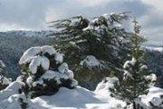 Hadath Jebbe Snowshoeing with Vamos Todos